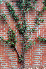 Plant growing on a brick wall